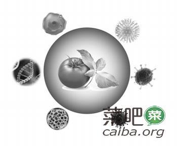 激活植物免疫力 新型农药有奥秘