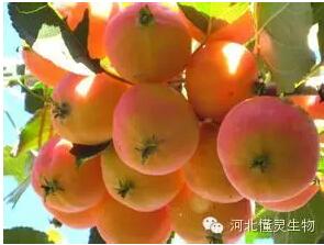 果树秋季管理技术