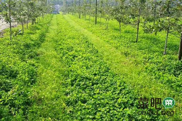 果园土壤有机质的作用与增加途径