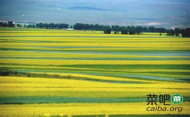 春季油菜田间管理技术指导意见