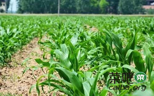 调整种植结构不是那么简单,除草剂用不对