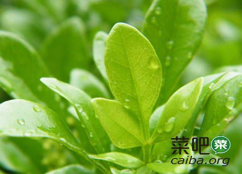 农药、肥料、杀菌剂与植物生长调节剂的复配应用实例