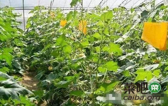有机农场这么防病虫害,这样的有机蔬菜是否放心呢?