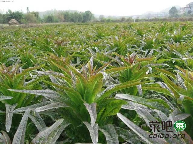 南方二十种蔬菜种植时间与要点简介