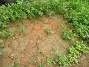 土壤为什么板结?如何消除?