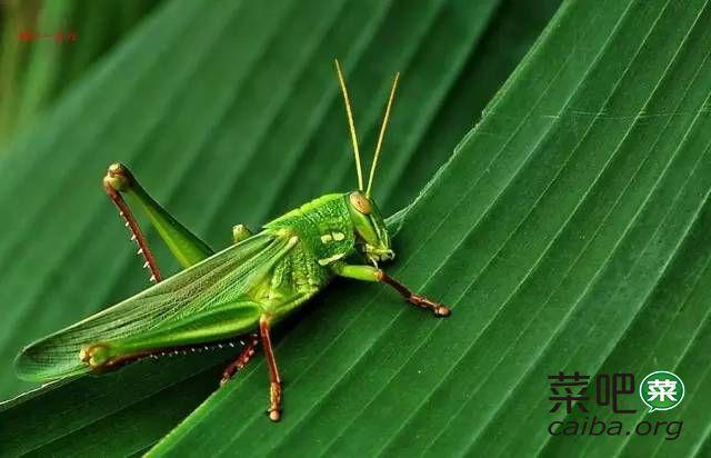 那些年夏天在农村常见的虫子,你认识几个?