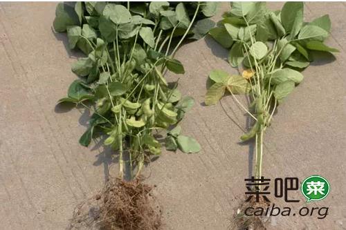 土壤酸化对蔬菜的危害、成因以及对策(最全面的总结)
