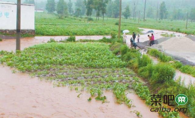 被暴雨泡过的农作物如何减少损害?农业专家建议做好灾后