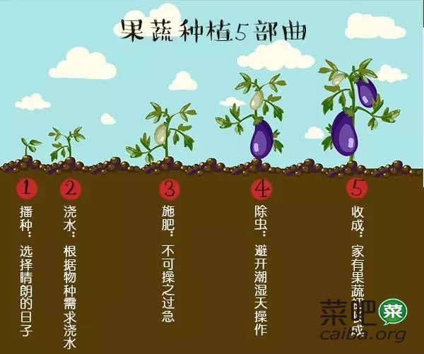拼搏太累,回家打造一个蔬果园享受生活吧~