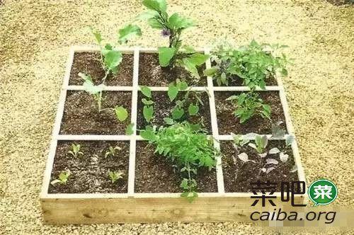 给我一米菜园,就可以解决孩子的自然教育问题,so easy