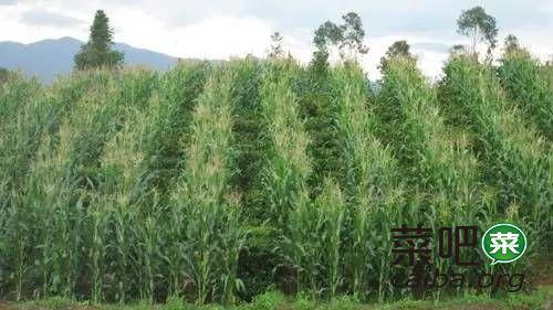 哪些农作物适合在山区种植?