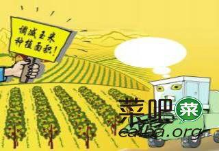 未来几年,玉米真的不能多种了!