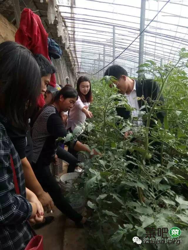 大棚西红柿花少且小怎么办?