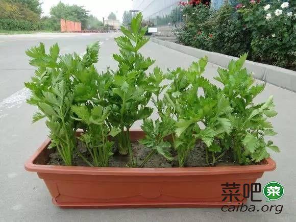 冬天种下这些应季菜,明年都摘不完